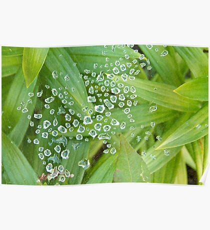 Spider Web Of Diamonds Poster