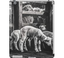 Woolshed Calendar 8 iPad Case/Skin