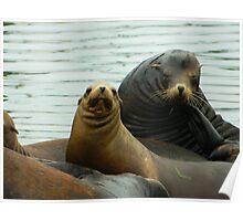 Grays Harbor Sea Lions Poster