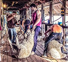 Woolshed Calendar 9 by Candice O'Neill