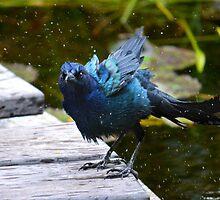 Bathing Bird by l4dia
