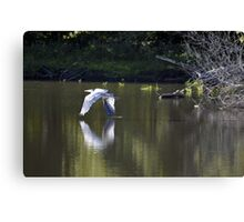 Just Above The Surface Canvas Print