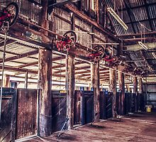 Woolshed Calender 12 by Candice O'Neill