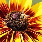 BUZZY BEE! by heatherfriedman