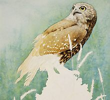 Barking Owl (Ninox connivens) - WIP by Laura Grogan