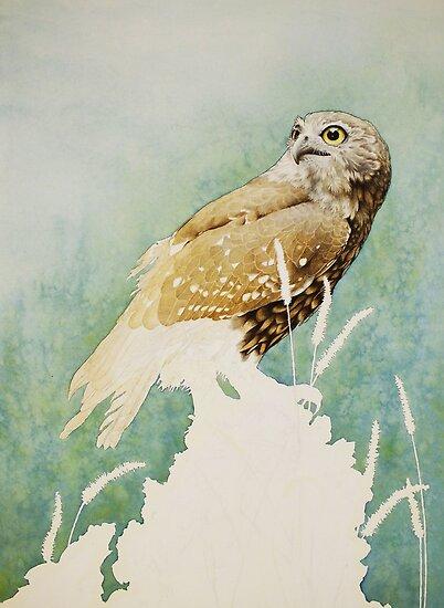 Barking Owl (Ninox connivens) - WIP by Laura Grogan