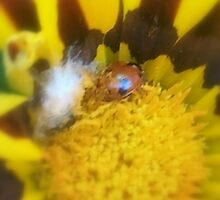 Bugs and Beetles in my Garden by KittenFlower