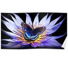Water lily Butterfly Poster