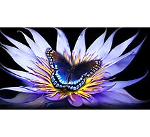 Water lily Butterfly Photographic Print