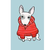 English Bull Terrier Wearing Red Chunky Knit Photographic Print