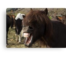 Laughing horse Canvas Print