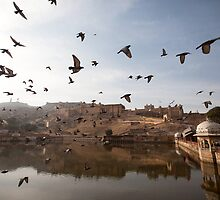 Wings at Amer Fort by Travelographer