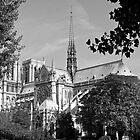 Notre Dame 3, Paris by Alex Cassels