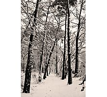 Snow Scene #4 Photographic Print