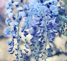 Wisteria Dreams at Twilight by micklyn