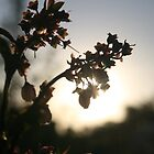 Blueberry Sunset  by Katala-Holling
