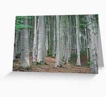 Deciduous forest Greeting Card