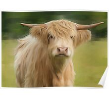 Oil and Chalk Painted Highland Cattle Poster