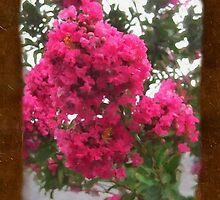Crape Myrtle Blank P3F0 by Christopher Johnson