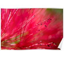 Bottle Brush Abstract Poster