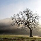 A Tree In The Park by LarryB007