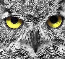 Owl with big yellow eyes by leksele
