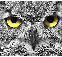 Owl with big yellow eyes Photographic Print