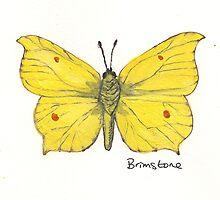 Brimstone butterfly. by Sam Burchell
