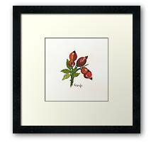 Rosehips Framed Print