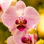 orchid by simon17