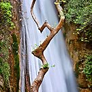 The dancing tree in Neda canyon by Hercules Milas