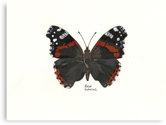Red Admiral by Sam Burchell