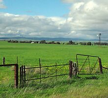 Green pastures - South Australia by imaginethis