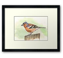 Male Chaffinch Framed Print