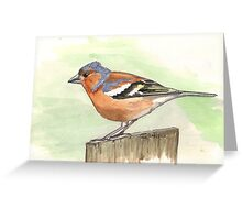Male Chaffinch Greeting Card