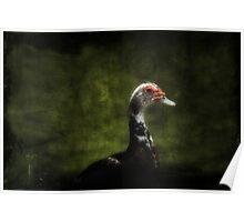 Posing Duck Poster