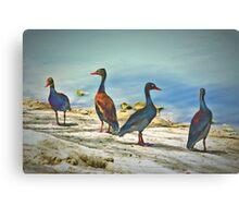 Psychedelic Ducks Canvas Print