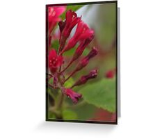 Pink garden flowers and green leaves in frame. Floral nature photography. Greeting Card