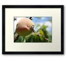 Insect on a Peach Framed Print