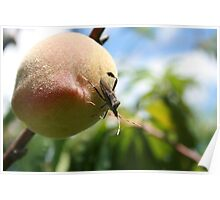 Insect on a Peach Poster