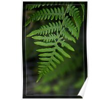 Green fern leaves. Floral photography. Poster