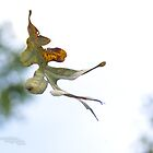 The dance of early fall by Nicole  McKinney