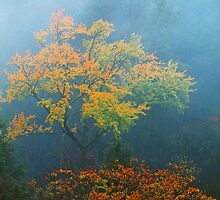 TREE IN AUTUMN MIST by Chuck Wickham