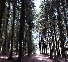 Woodlands by Daveburt