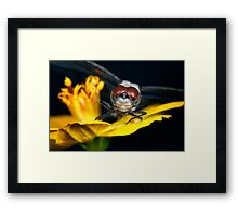Hmmm, what's for supper? Framed Print