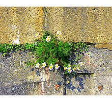 The Harbour Wall Photographic Print