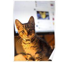 Desk Kitten Poster