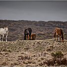 Wild Horses by Barb Leopold