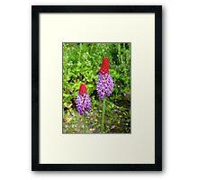 Frilly Garden Wonders Framed Print