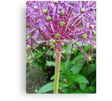 Spikey Lilac and Green Canvas Print